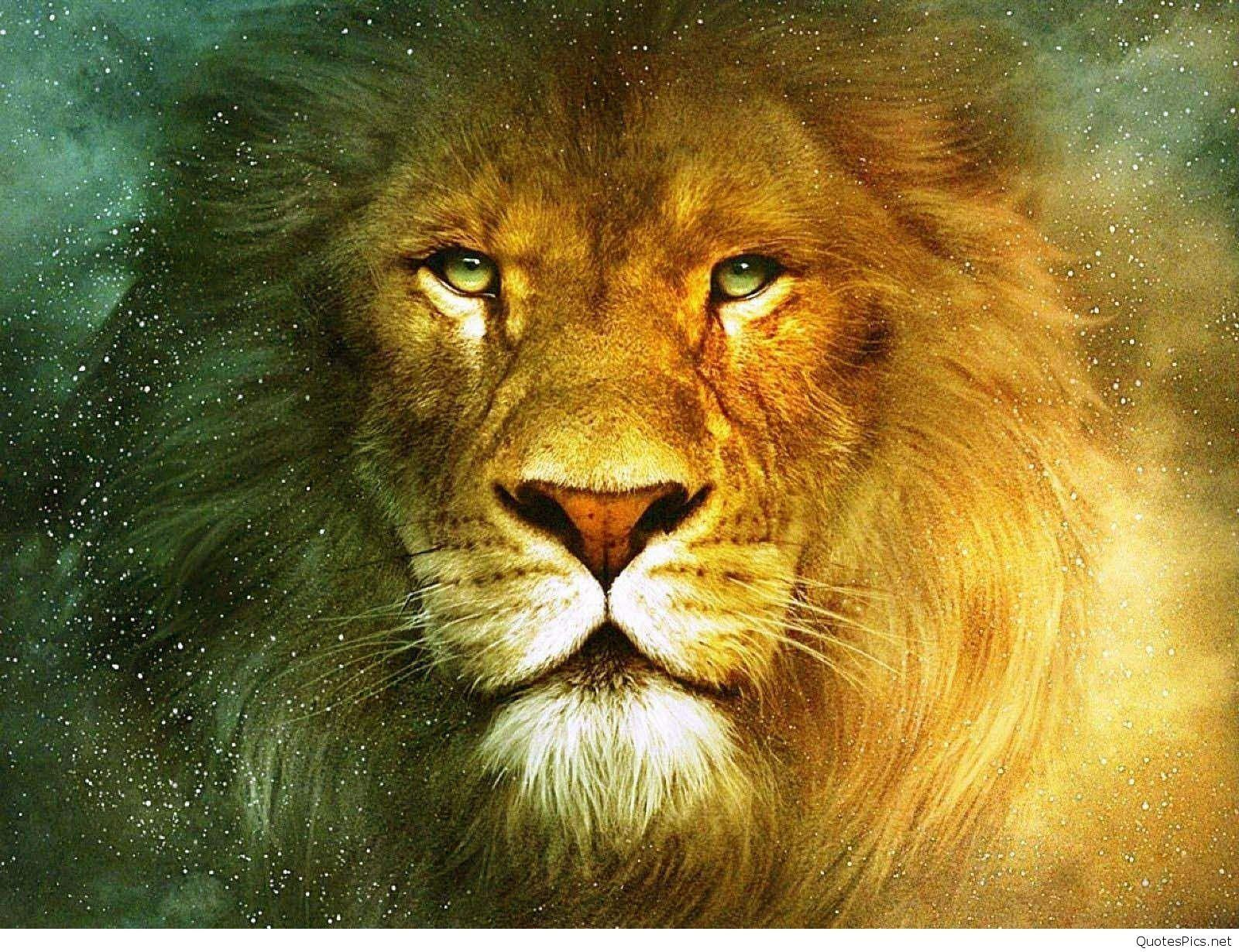 Cool Lion Wallpapers 1080P