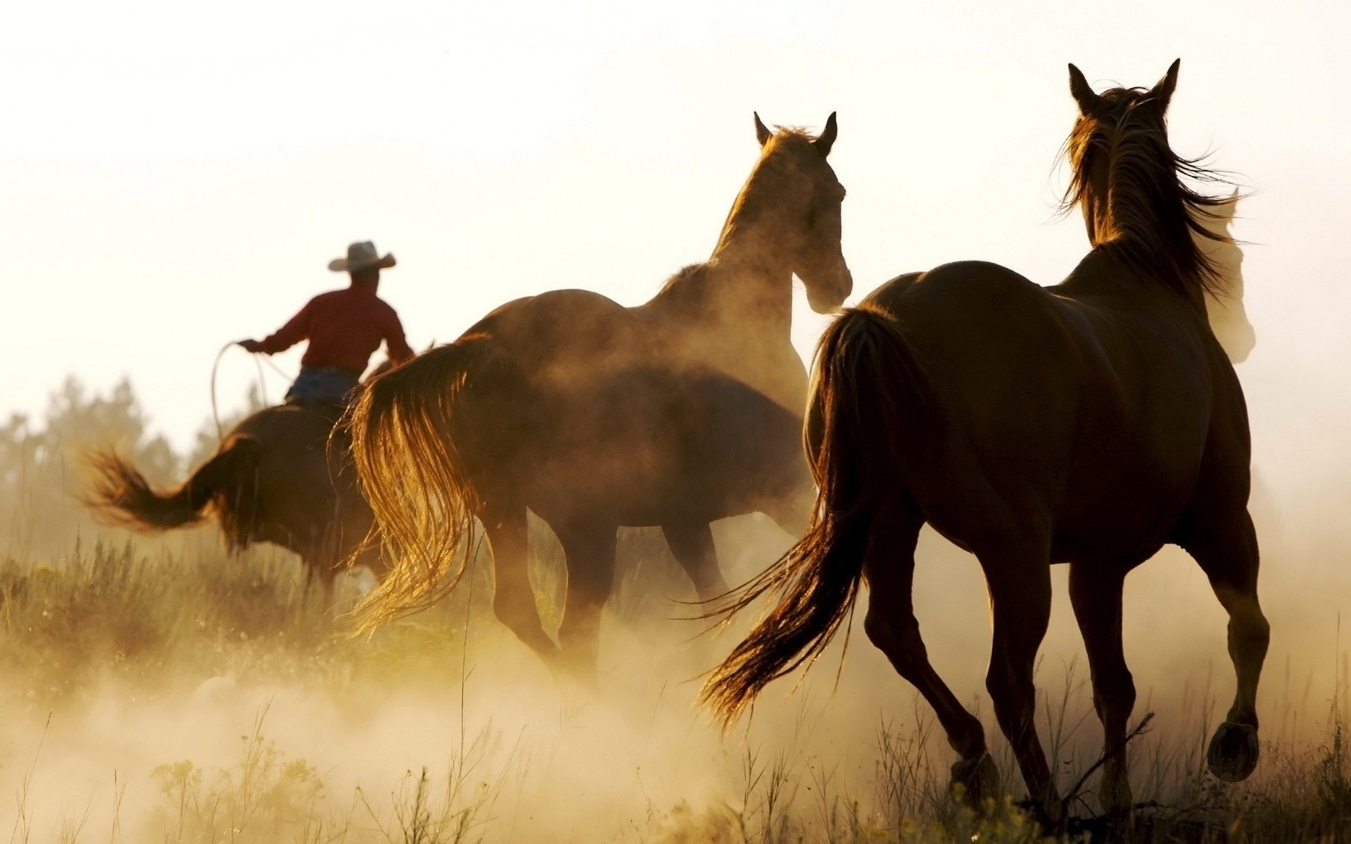Western Horse Backgrounds