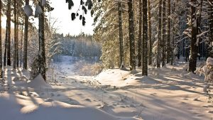 Snow Forest Wallpaper 68+