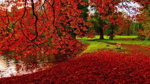 Autumn HD Wallpapers 74+