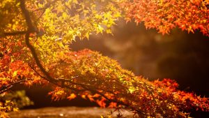 Autumn Wallpaper Backgrounds 73+
